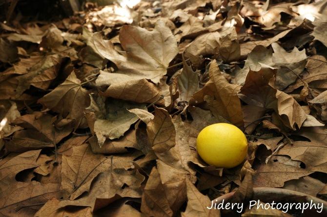 Lemon on leaves